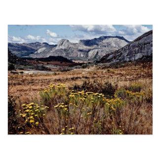 Cartão Postal Montanhas orientais, flores de Zimbabwe