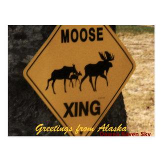 Cartão Postal moosecrossing, cumprimentos de Alaska