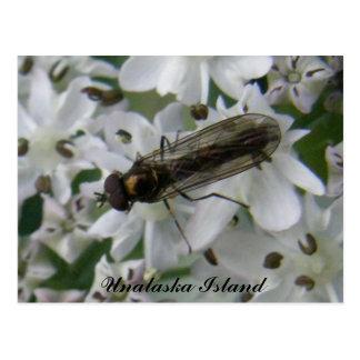 Cartão Postal Mosca nas flores de Putchki, ilha de Unalask