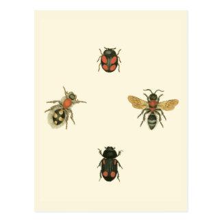 Cartão Postal Moscas e besouros pelo estúdio da visão