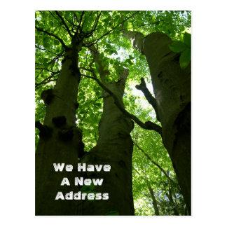 Cartão Postal Mover-se grande da floresta do verão das árvores