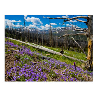 Cartão Postal Mt. Washburn