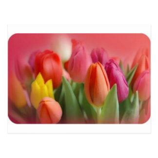 Cartão Postal multi tulipas da cor no fundo vermelho