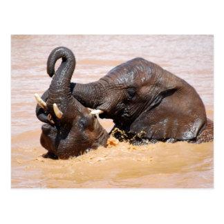 Cartão Postal Mundo da água dos elefantes