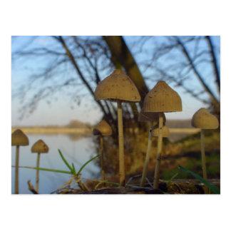 Cartão Postal Mundo pequeno - cogumelo próximo acima no lago