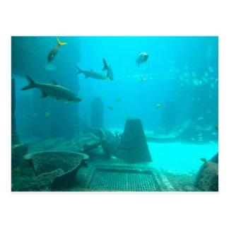 Cartão Postal Mundo subaquático
