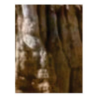 Cartão Postal músculos cinzelados na rocha