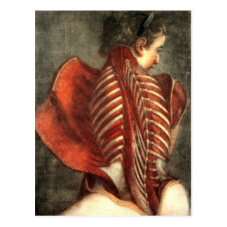 Cartão Postal Músculos da parte traseira em uma fêmea