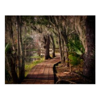 Cartão Postal Musgo espanhol e pântanos de Louisiana