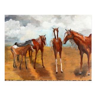 Cartão Postal Mustang irrisórios