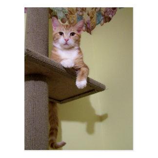 Cartão Postal na árvore do gato