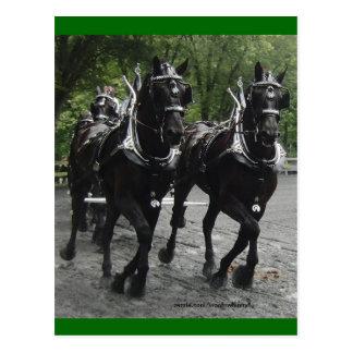 Cartão Postal Na etapa -- Cavalos de esboço