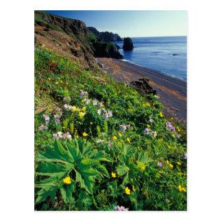 Cartão Postal NA, EUA, Alaska, ilhas de Semidi, Wildflowers