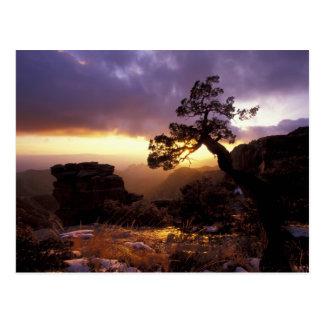 Cartão Postal NA, EUA, arizona, Tucson, por do sol e solitário