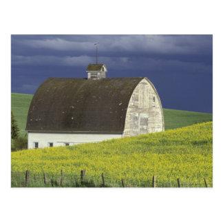 Cartão Postal NA, EUA, Idaho, ao sul de Genesse, campo de Canola