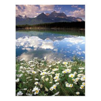 Cartão Postal Nacional 2 de America do Norte, Canadá, Alberta,
