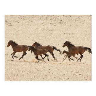 Cartão Postal Namíbia, Aus. Grupo de funcionar cavalos selvagens