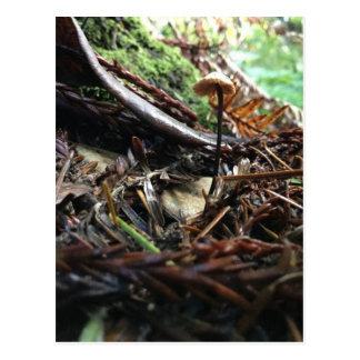 Cartão Postal Não tropece o cogumelo
