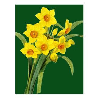 Cartão Postal Narciso (N Tazetta)
