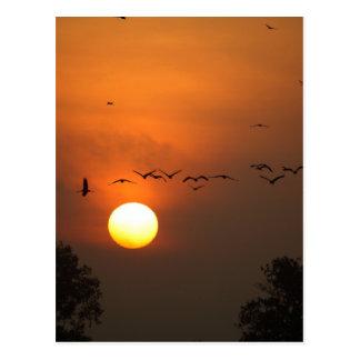 Cartão Postal Nascer do sol com rebanhos de guindastes do vôo