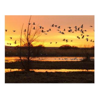 Cartão Postal nascer do sol e gansos