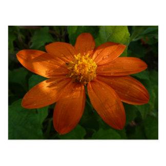 Cartão Postal Nascer do sol em floral alaranjado do girassol