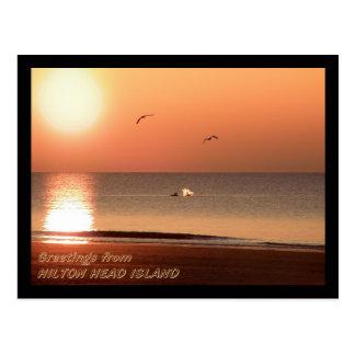Cartão Postal Nascer do sol, golfinhos e gaivota
