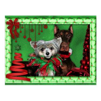 Cartão Postal Natal - árvore de fita vermelha - Doberman Crestie