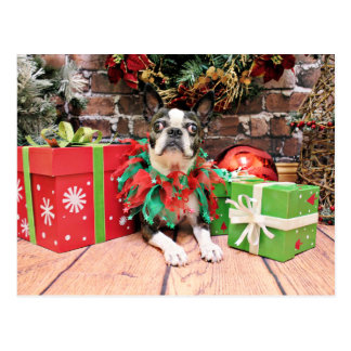 Cartão Postal Natal - Boston Terrier - Natty