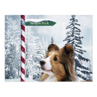 Cartão Postal Natal de Sheltie