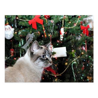 Cartão Postal Natal do gato Siamese