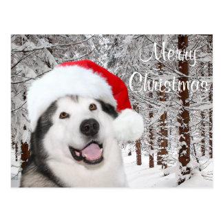 Cartão Postal Natal do Malamute do Alasca