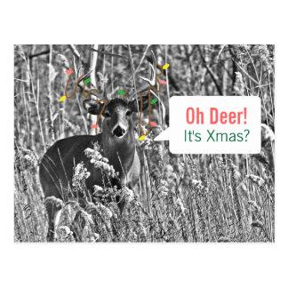 Cartão Postal Natal engraçado - cervo com luzes de Natal