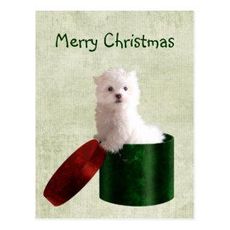 Cartão Postal Natal maltês do filhote de cachorro
