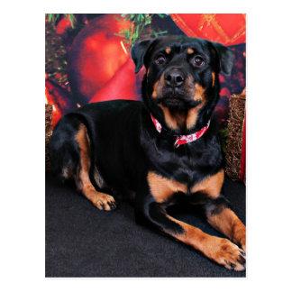 Cartão Postal Natal - Rottweiler - Nalani