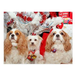Cartão Postal Natal sábio de três cachorrinhos