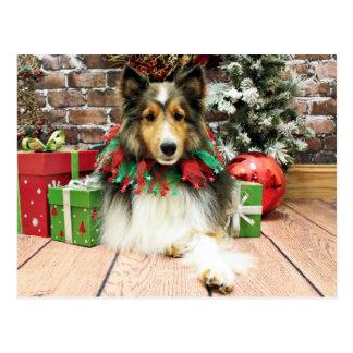 Cartão Postal Natal - Sheltie - duquesa
