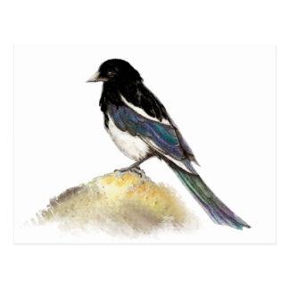 Cartão Postal Natureza do pássaro do jardim do Magpie da