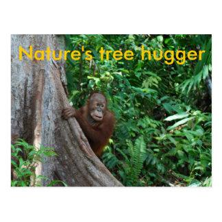 Cartão Postal Natureza original de Hugger Bornéu da árvore
