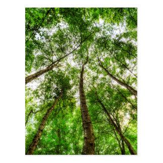 Cartão Postal Natureza que alcança para o céu