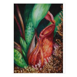 Cartão Postal Nepenthes da arte da aguarela de Bornéu