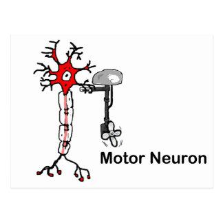Cartão Postal Neurônio de motor