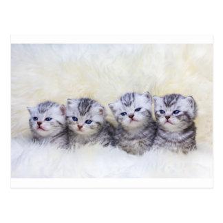 Cartão Postal Ninho com os quatro gatos de gato malhado novos em
