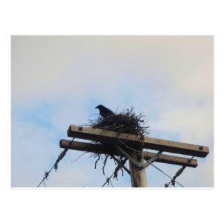 Cartão Postal Ninho de corvos em Ak