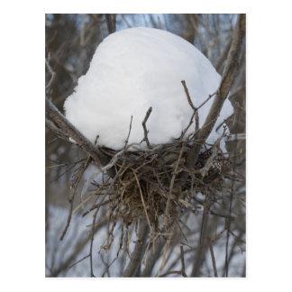 Cartão Postal Ninho do pássaro do inverno