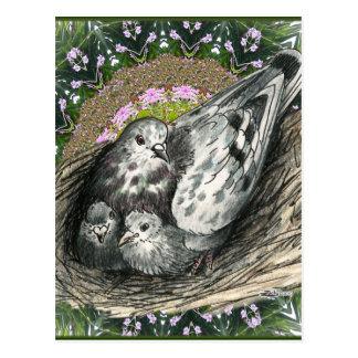 Cartão Postal Ninho do pombo