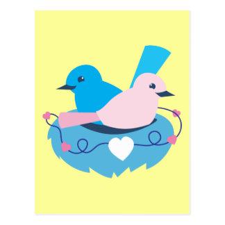 Cartão Postal Ninho dos lovebirds das carriças do amor