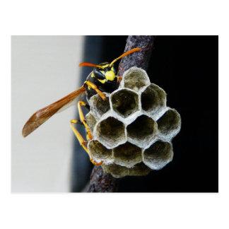 Cartão Postal Ninho e trabalhador da vespa