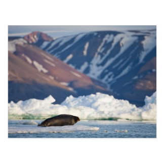 Cartão Postal Noruega, Svalbard, ilha de Spitsbergen, 2 farpados