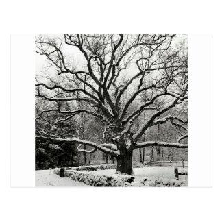 Cartão Postal Nova Iorque do carvalho de Bedford da árvore
